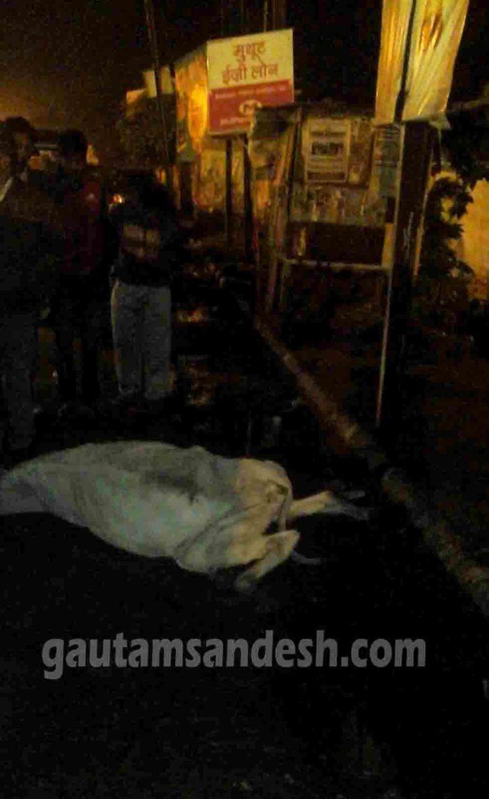 बदायूं क्लब में बिजली चोरी करने से गाय की मौत